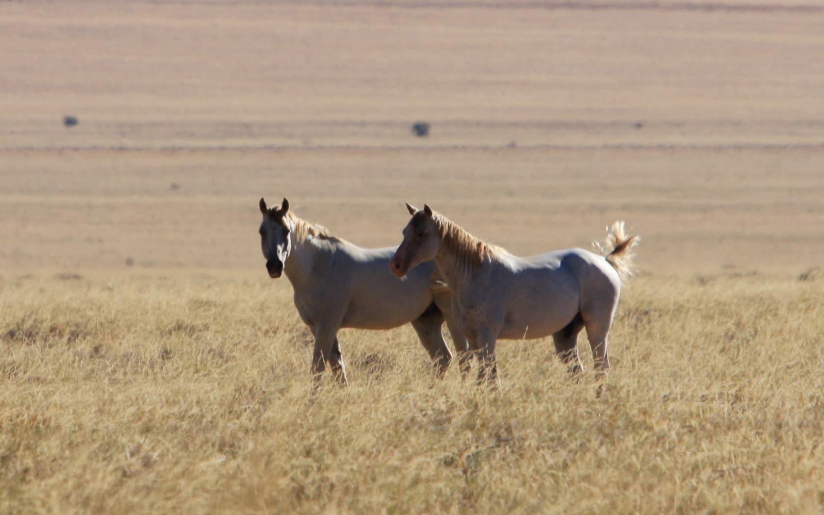 Pferde partnersuche